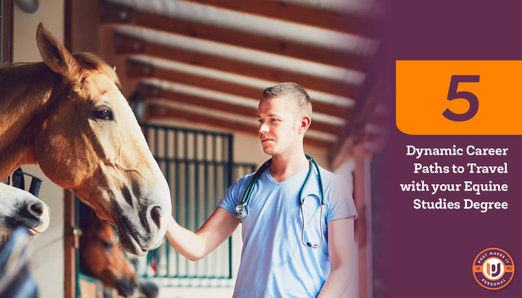 5 Career Paths for Your Equine Studies Degree