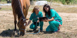 two females in scrubs looking at horse