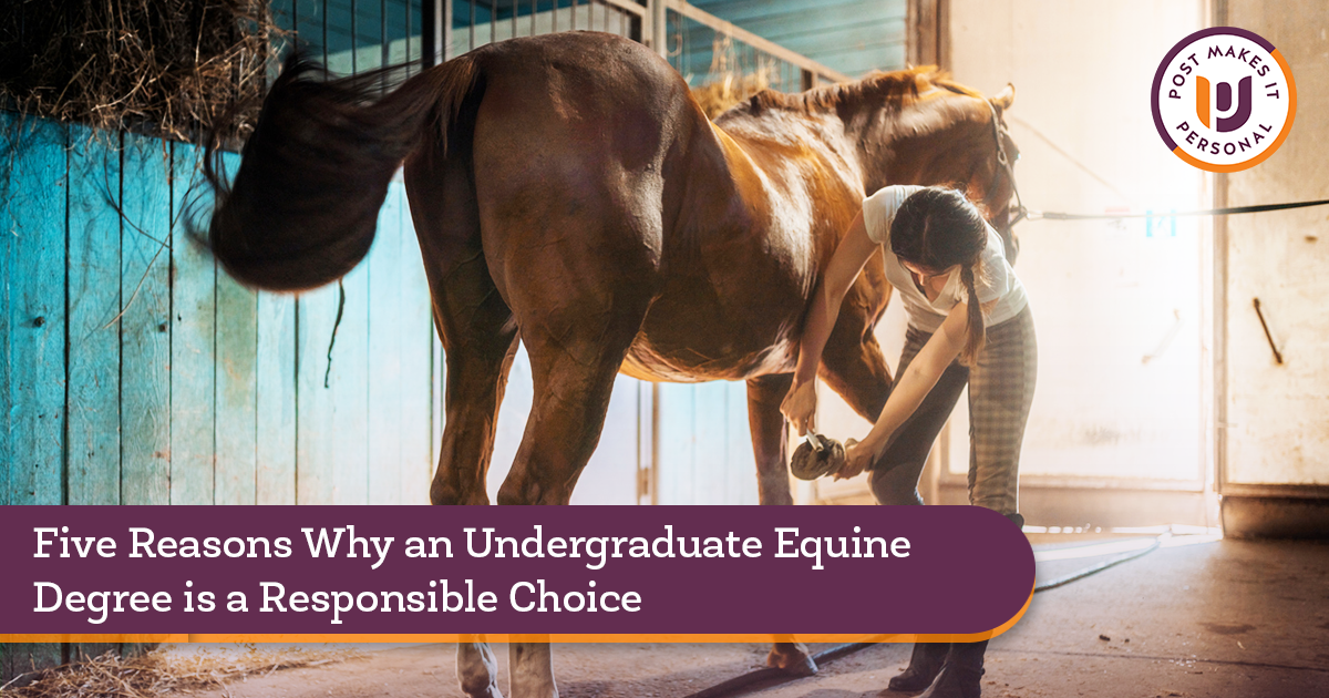Five Reasons Why an Undergraduate Equine Degree is a Responsible Choice